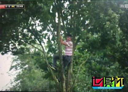 英超球迷为了看曼城比赛居然爬上大树